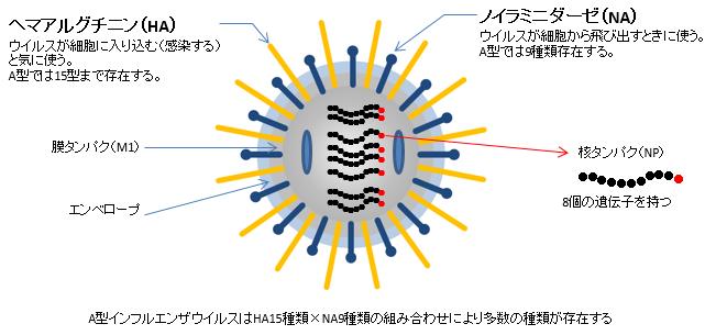 influenza02